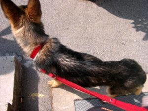 Tierschutzanzeige - Tierheim Aachen