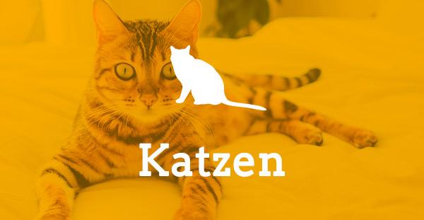 Tierheim Aachen Katzen